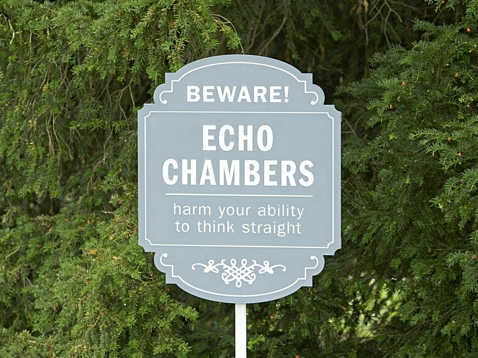 Photo of evergreen trees with a blue wooden sign in front of them saying