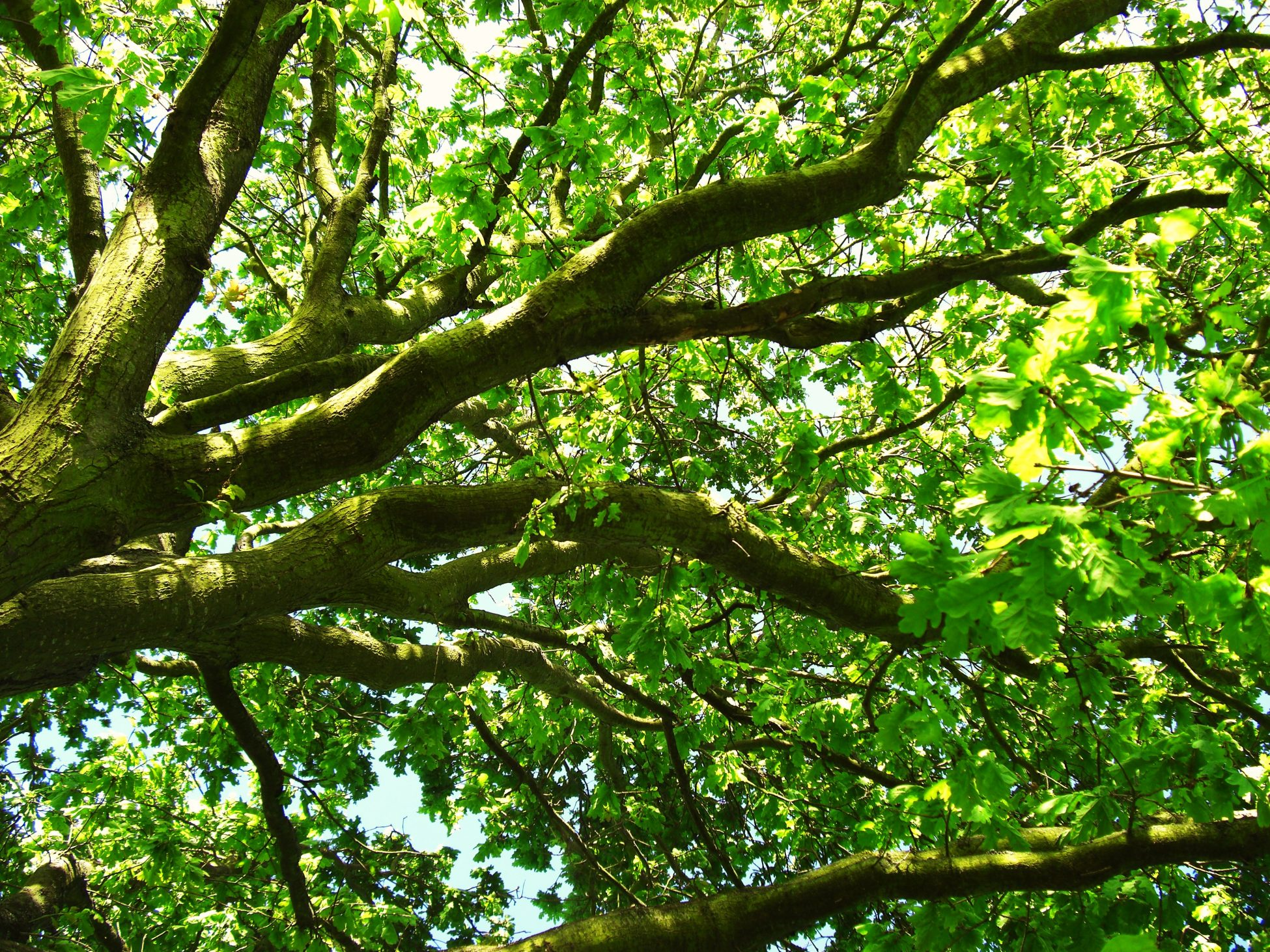 Close up photo of tree branches and green leaves