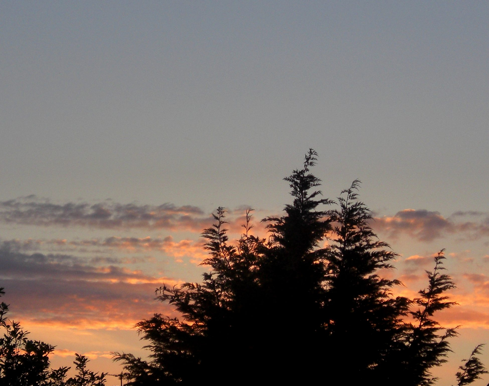 Photo of the sky with grey and orange clouds in the sky with some tree tops in silhouette