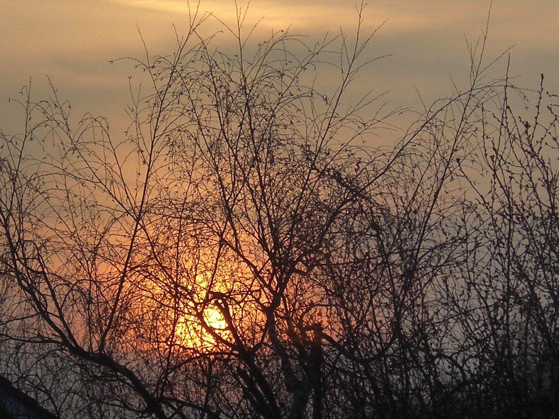 Photo of a cloudy sunset behind bare tree branches