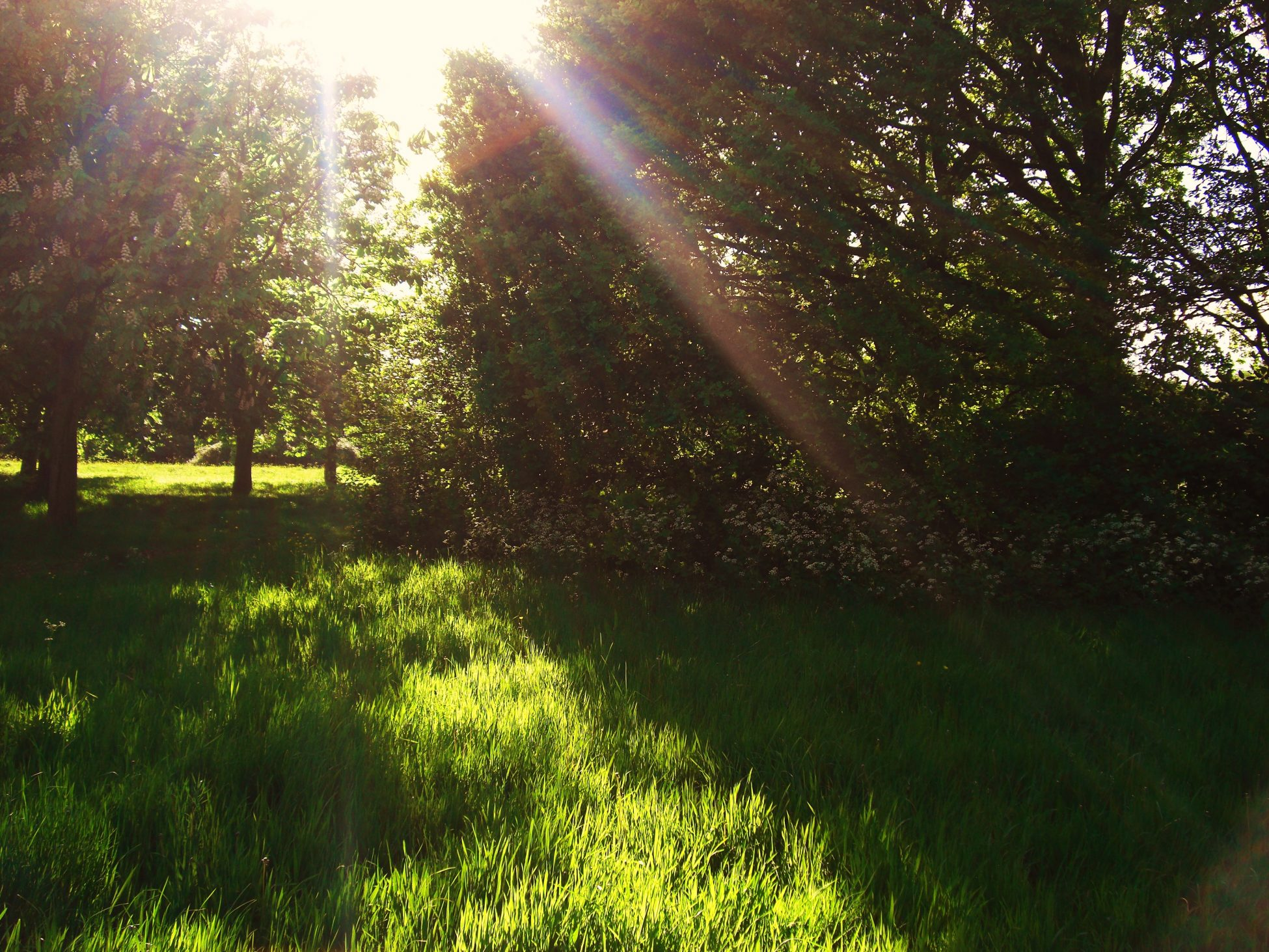 Photo of green grass and trees. The sun is beaming through the trees.