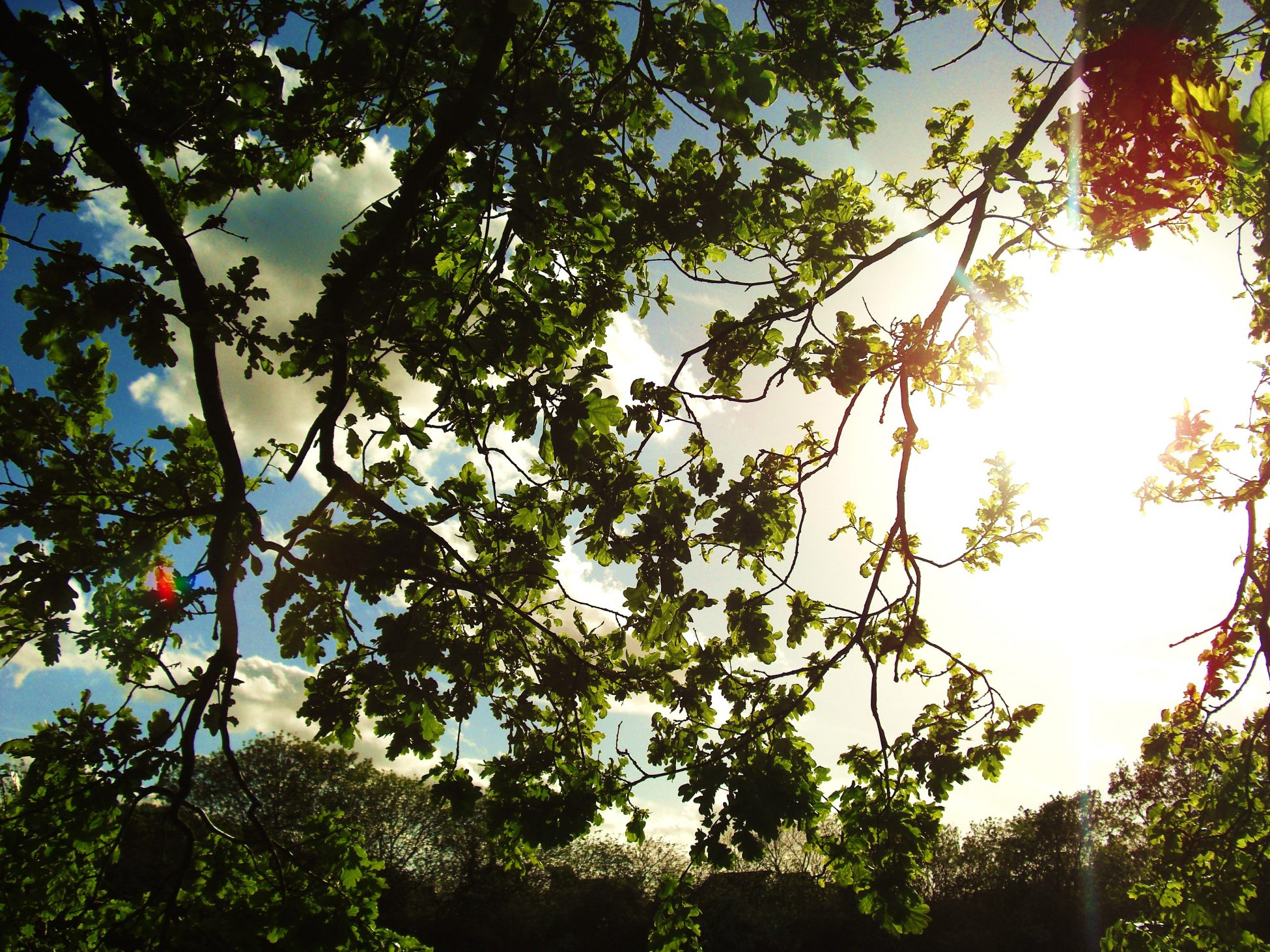 Photo looking up at a blue sunny sky through tree branches
